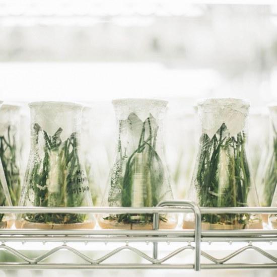 becher-plantes